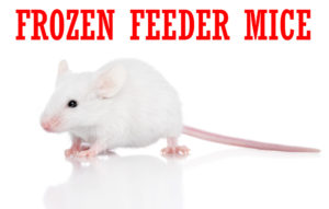 frozen-feeder-mice-1000