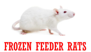 frozen-feeder-rat-1000