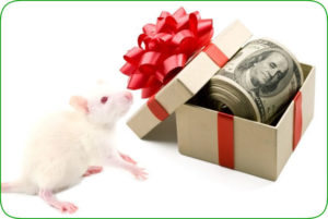 Reward Discount on Cheap Frozen Feeder Mice and Rats